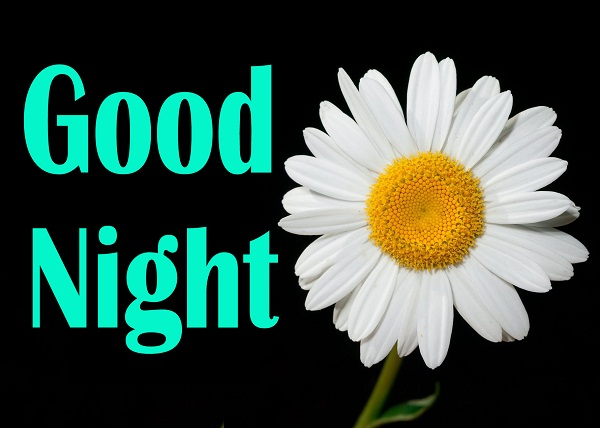 Good Night Flower Wallpaper