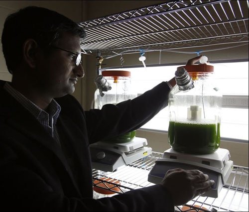 Researchers on Biofuel from Algae