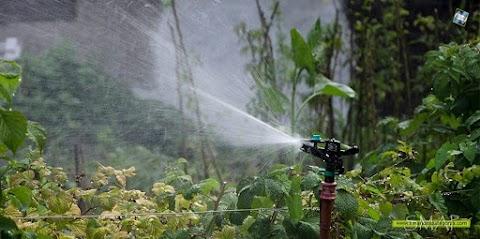 Jardines y Huertas: algunas nociones del riego