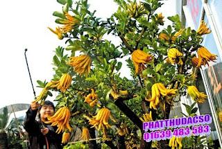 Phật thủ - ý nghĩa tâm linh của tết Việt