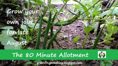 Grow your own August 80 Minute Allotment Green Fingered Blog