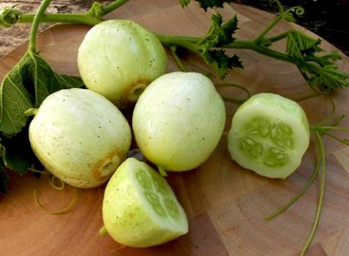 Renee's Garden Seeds: Renee's Blog: Beth's Guide for ...