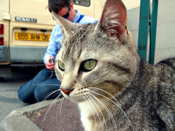 kat van cannet