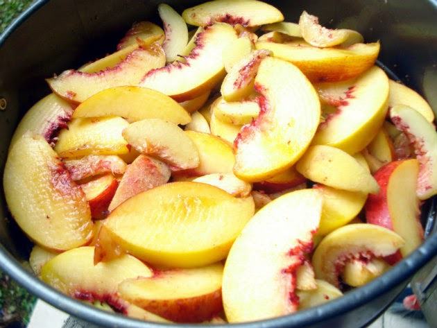 placing nectarine slices