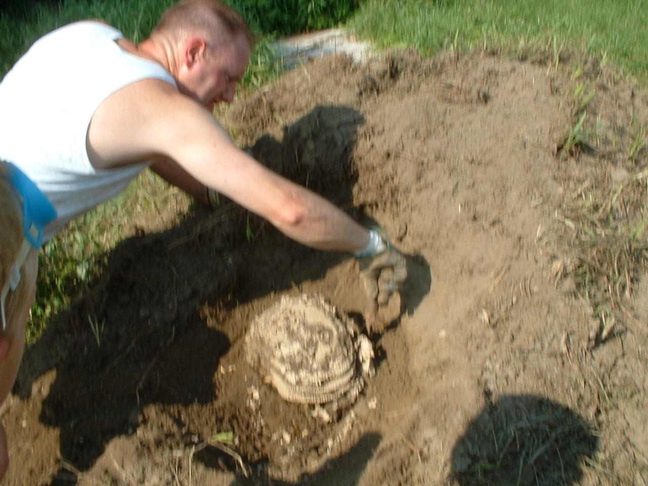 Rat Nest Underground Garden Design Ideas