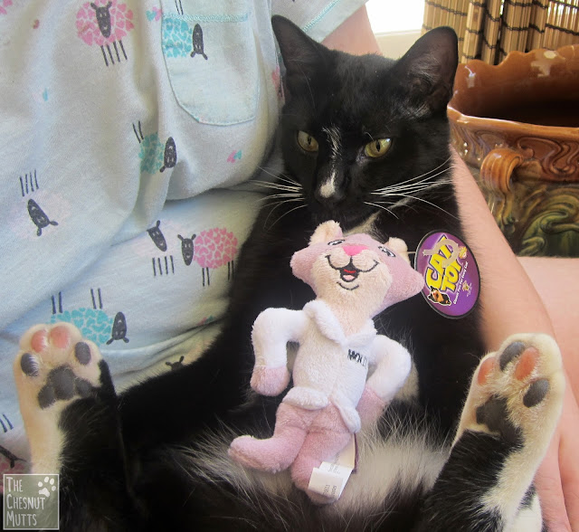 Mr. Kitty with the Molly toy