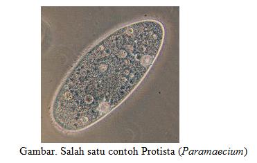 Kingdom Protista: Ciri-ciri umum - BELAJAR BIOLOGI