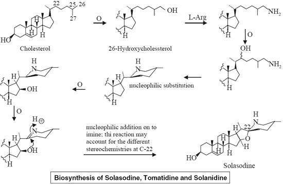 Biosynthesis of Solasodine, Tomatidine and Solanidine