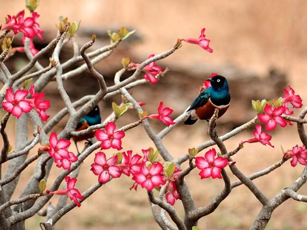 Flowers+desktop+wallpapers+with+birds.+(1)
