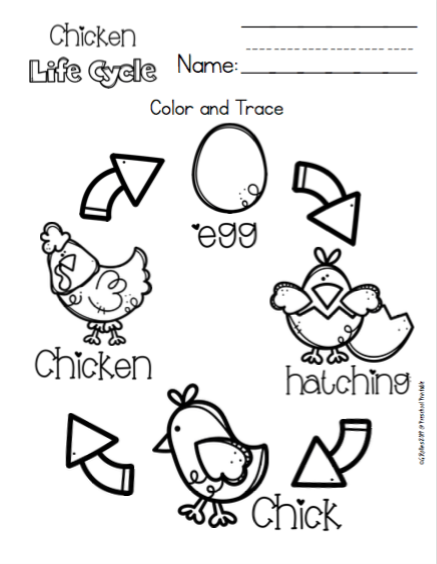 Chicken Life Cycle for Toddlers ~ Preschool Printables