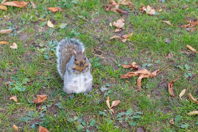 Scoiattolo-Boston public garden e Boston Common