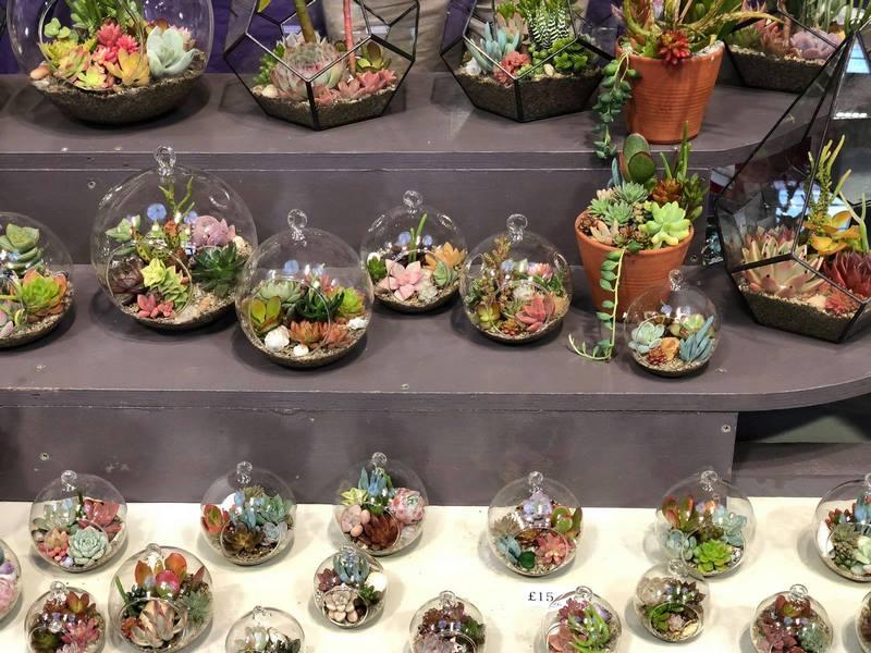 Terrarios pequeños con plantas suculentas