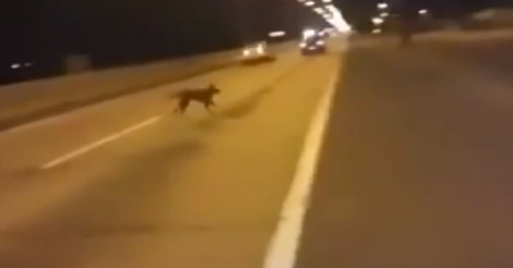 Dog Suddenly Teleports Out Of Thin Air During A Street Race In Chile