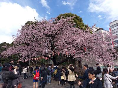 東京・上野公園でお花見