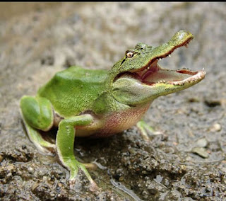 <alt img src='gambar.jpg' width='100' height='100' alt='Frog - crocodile'/>