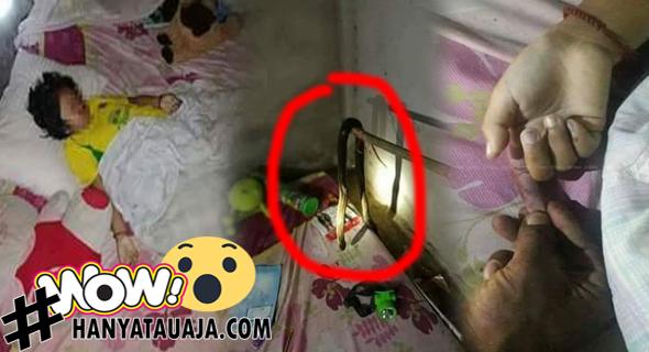 Anak Berusia 9 Tahun Mati Dipatuk Ular Saat Tidur