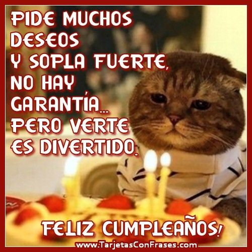 feliz cumpleaños gato