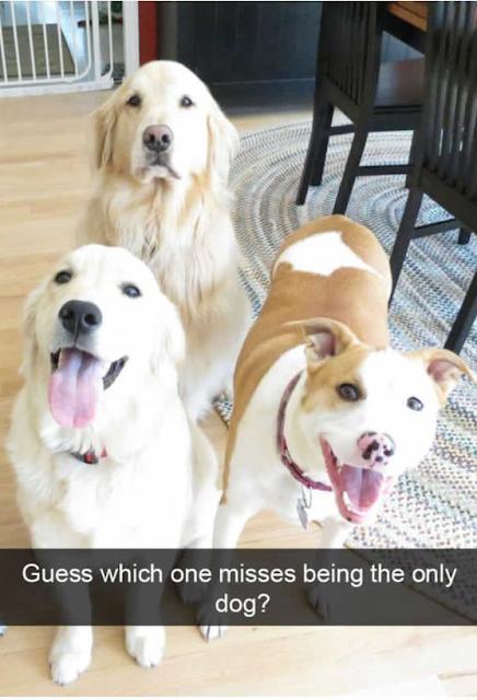 Cute Dog Memes Viral Online