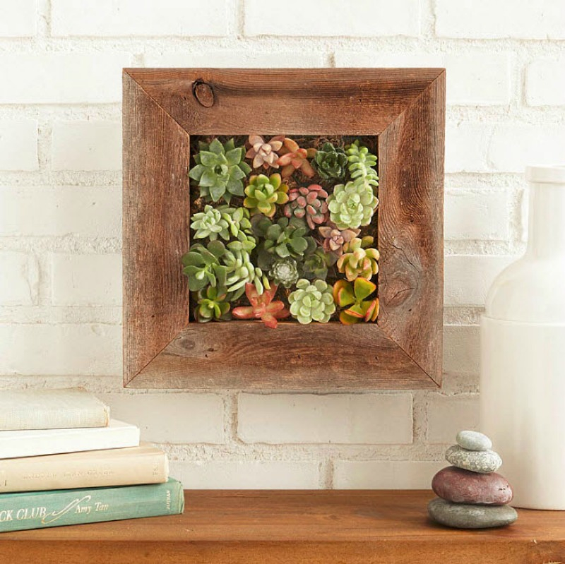 14 Ways to Display Succulents - Succulent Wall Garden