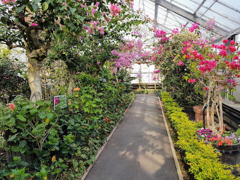 溫室內可以賞許多種花