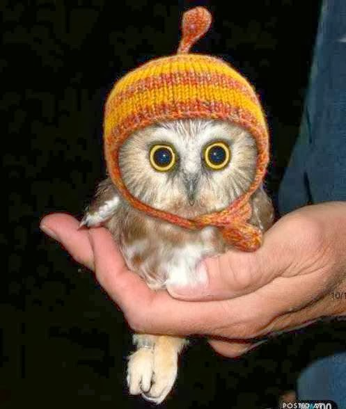 funny animals pictures of cute little owl in hat.
