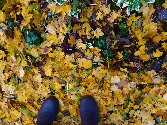 Yellow leaves and my feet - leaf inspection!