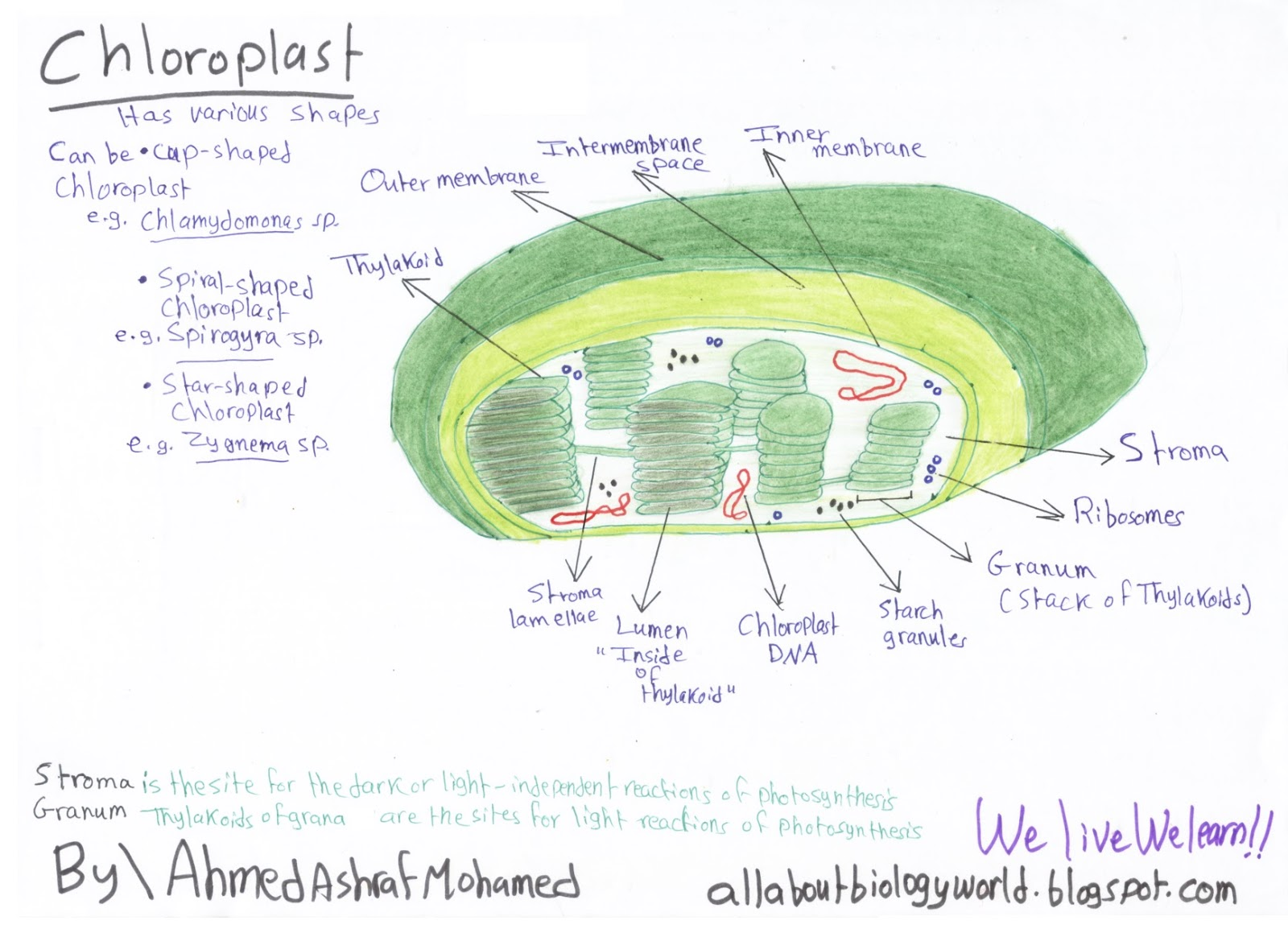 Biology Club: Overview of plant cells - Part 1 Structure ...