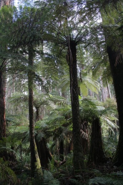 Fern fossil data clarifies origination and extinction of species