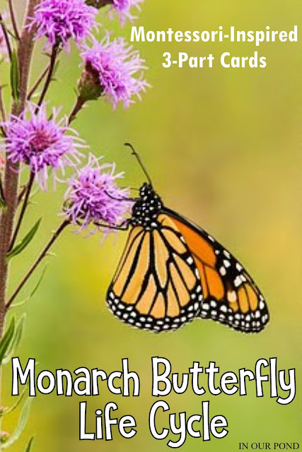Montessori Inspired 3-Part Cards to Match the Safari Ltd Monarch Butterfly Life Cycle Set // free printable // In Our Pond