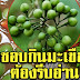 เมนูมะเขือพวง กินทุกวัน มันจะทำให้ร่างกายเราเปลี่ยนไปอย่างมหาศาล