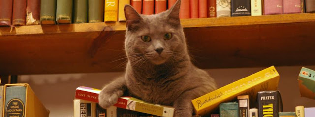 A photo of Hodge the famous cat from the Selected Works website
