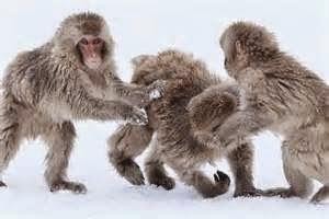 صور للحيوانات غريبه ومضحكه 2014