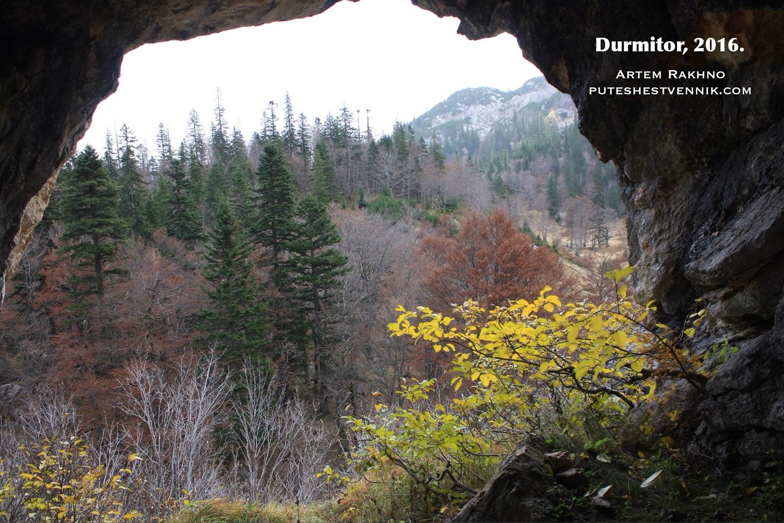 Вид из пещеры на лес
