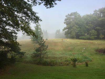 foggy August morning