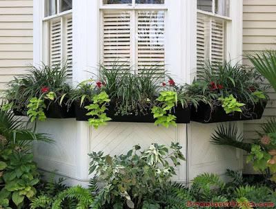 Bay window with greenery