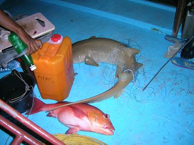 pescare alle maldive