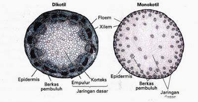 Ciri Ciri dan Klasifikasi Kingdom Plantae  Pengertian, Ciri Ciri dan Klasifikasi Kingdom Plantae (Tumbuhan)