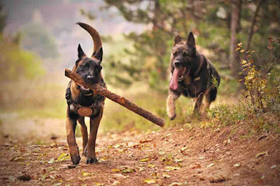 الأمراض التي يمكن أن تنتقل عن طريق الكلاب .