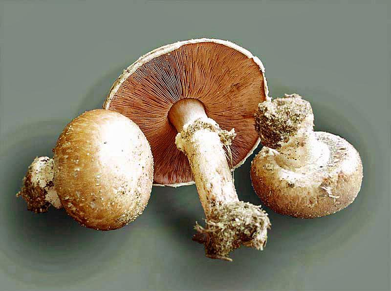champignons selber anbauen beheizen der champignon winterkulturen. Black Bedroom Furniture Sets. Home Design Ideas