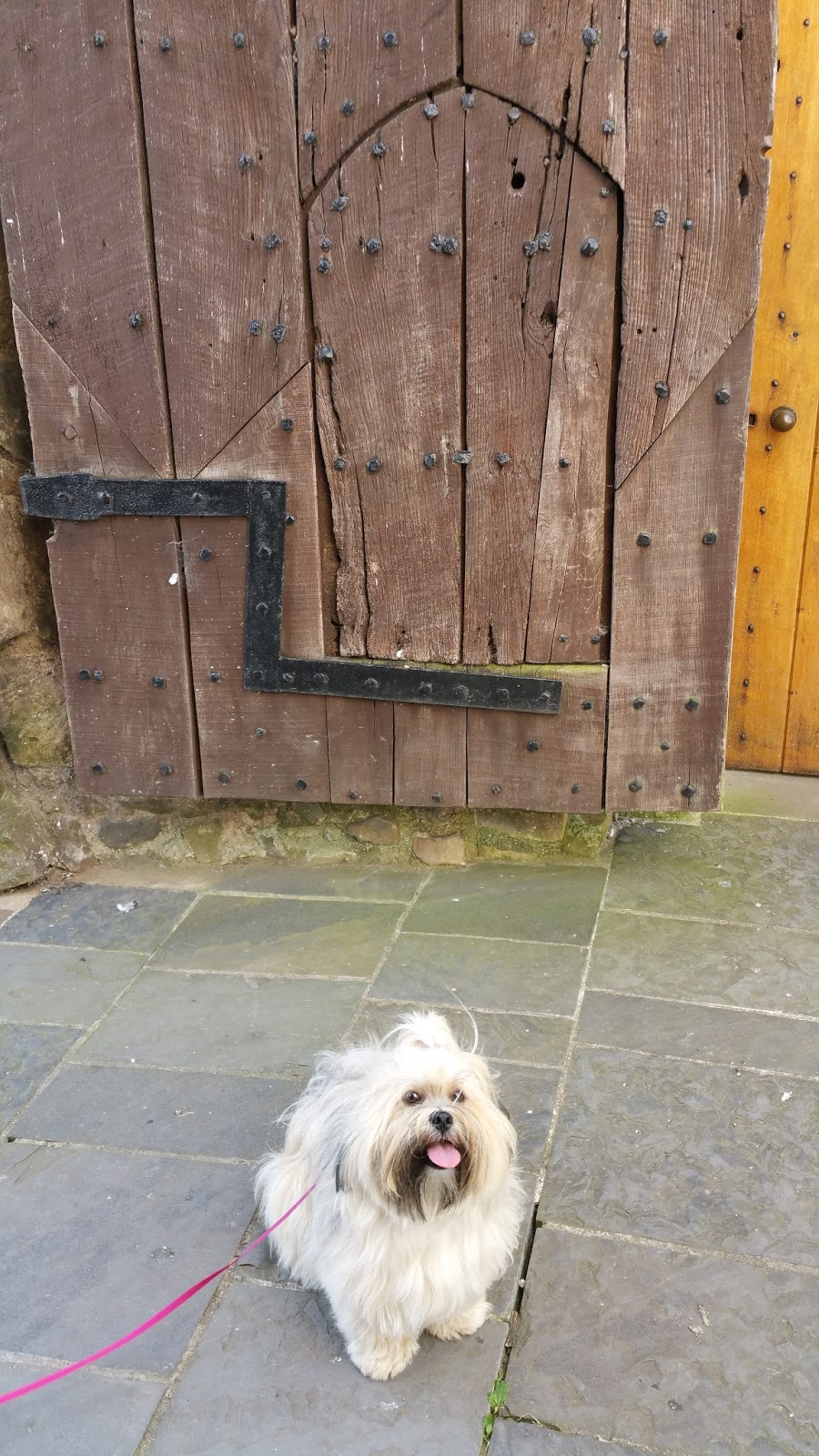 Dog Friendly Places To Eat Oswestry