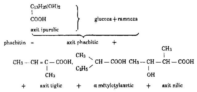 Thành phần hóa học Khiên Ngưu - Ipomoea hederacea - Nguyên liệu làm thuốc Nhuận Tràng và Tẩy