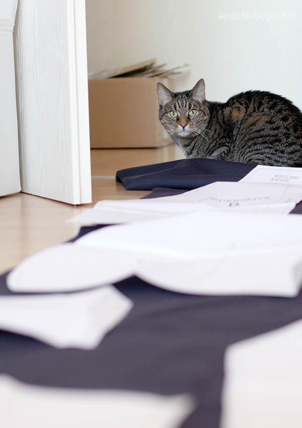 klickern mit katzen handbuch tipp und tricks