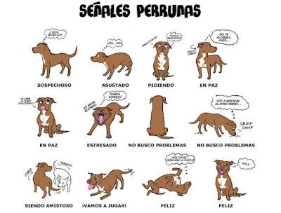 lenguaje corporal del perro