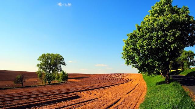 Weg met bomen en omgeploegde velden, overdag bij een blauwe hemel.