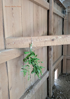 herbs in chicken coop