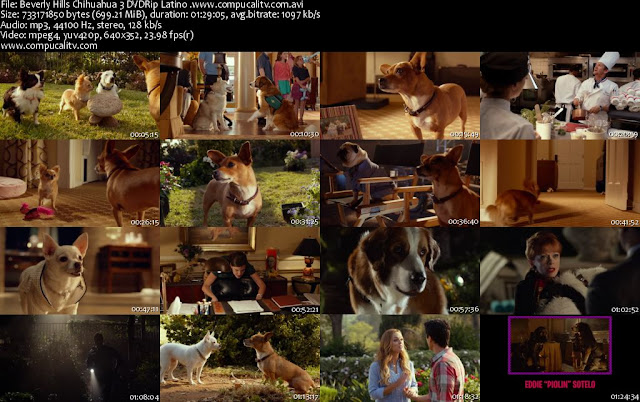 Un Chihuahua de Beverly Hills 3 DVDRip Español Latino 2012