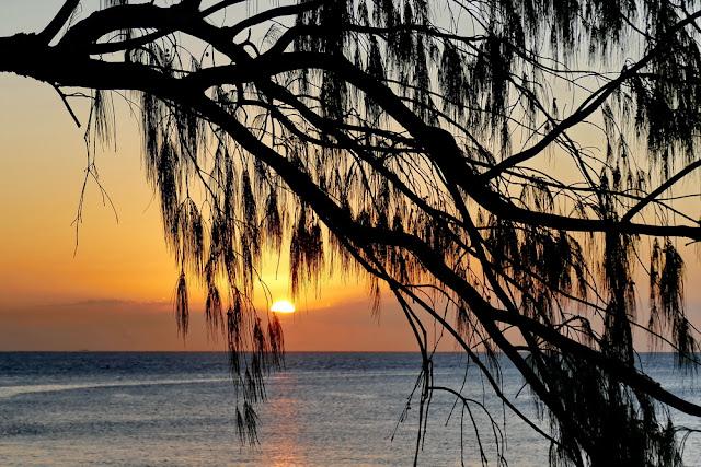 Heron Island Sonnenuntergang Baum Sunset Silhouette Insel Meer kitschig