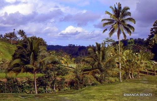 Il rigoglioso e verdeggiante entroterra di Bali