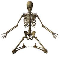 Skeleton (kerangka manusia)