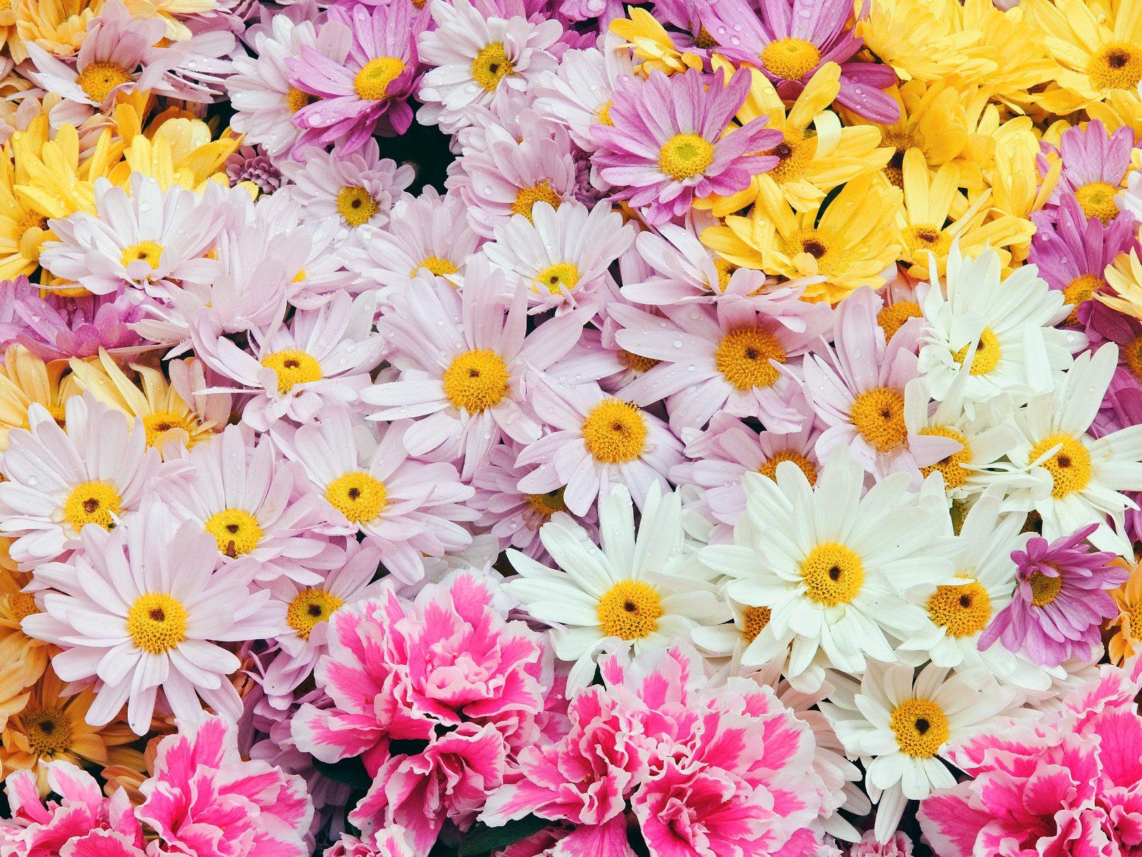 Buletin Cinta Download Walpaper Cantik Bunga Dan Bingkai